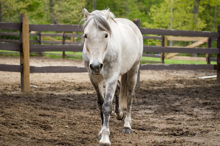 Лошадь в национальном парке Коннемара Ирландия