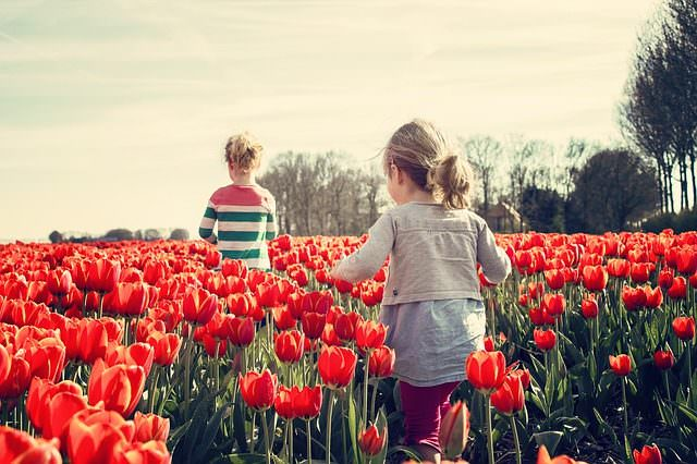 тюльпаны и дети