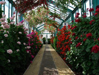 Что посетить в Бельгии: Королевская оранжерея и замки с музеями